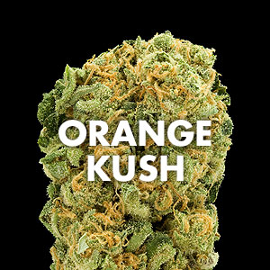 orange kush(marijuana online)