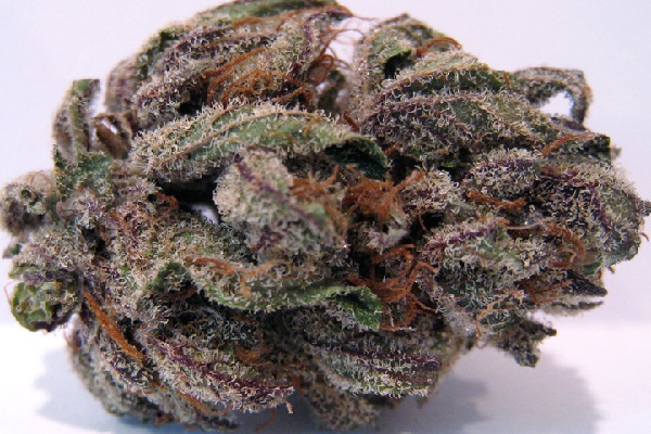 Purple Bubba Kush