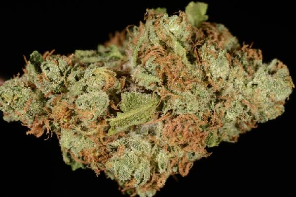 Red Beard Marijuana Strain Pot Valet