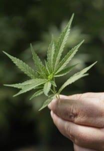 Top 3 Most Popular Uses For Medical Marijuana