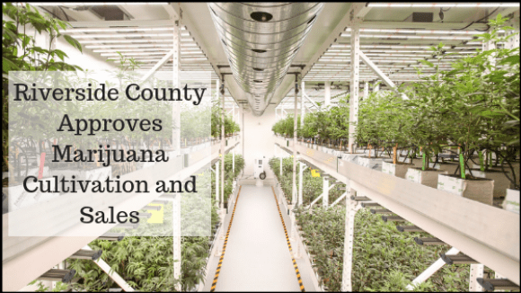 Riverside County Approves Marijuana Cultivation and Sales