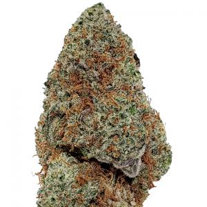 Banana Pudding Cannabis
