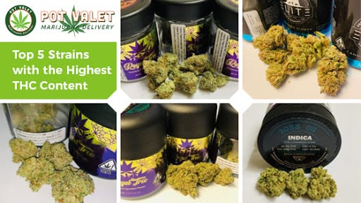 Top 5 Strains with the Highest THC Content