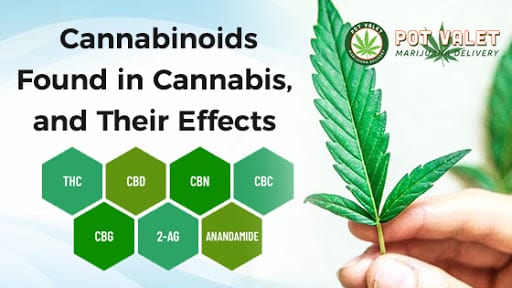 Cannabinoids Found in Cannabis, and Their Effects